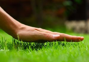 Hand above green fresh grass on a lawn.