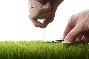 Man cuts lawn with a nail scissors