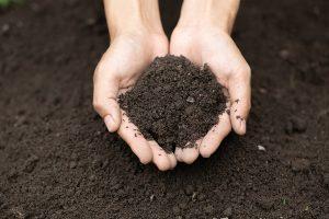 Gardener holding soil in hands.