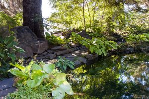 A shady garden with a miniature pond water feature, flat stones, and large-leafed plants