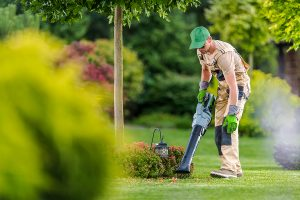 A landscaper using a leaf blower around decorative shrubs and a small tree.